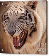 Textured Tiger Acrylic Print