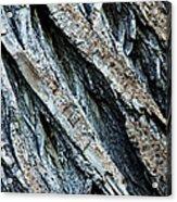 Textured Tree Bark Acrylic Print