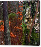 Textures Of Fall Acrylic Print