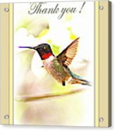 Thank You Card - Bird - Hummingbird Acrylic Print
