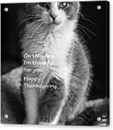Thanksgiving Kitty Bw Acrylic Print