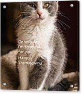 Thanksgiving Kitty Acrylic Print