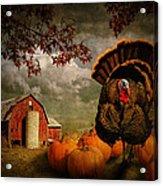 Thanksgiving Turkey Among Pumkins Acrylic Print