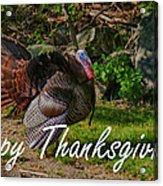 Thanksgiving Turkey Acrylic Print