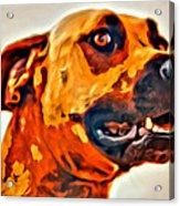 That Doggone Face Acrylic Print