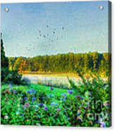That Early Morning Light Acrylic Print