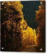 The Golden Road Acrylic Print