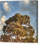 That Peaceful Tree Again Acrylic Print