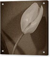 That There Tulip Acrylic Print