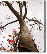 That Tree Acrylic Print