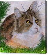 The Abandoned Kitten Acrylic Print