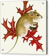 The Acorn Mouse Acrylic Print