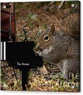 The Acorn's Pianist Acrylic Print
