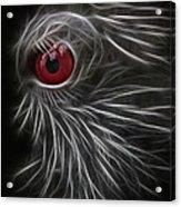The All Seeing Eye Acrylic Print