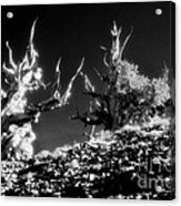 The Ancients - 1001 Acrylic Print by Paul W Faust -  Impressions of Light