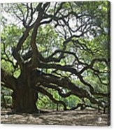 The Angel Oak Acrylic Print