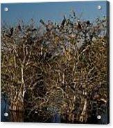 The Anhinga Trees Acrylic Print