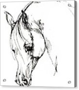 The Arabian Horse Sketch Acrylic Print