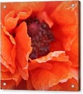 The Art Of Poppy Acrylic Print