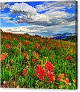 The Art Of Wildflowers Acrylic Print