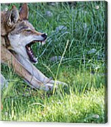 The Attack Acrylic Print