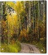 The Autumn Road Acrylic Print