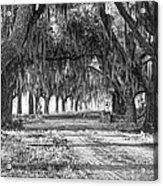 The Avenue Of Oaks Acrylic Print