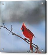The Awesome Cardinal Acrylic Print