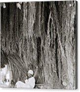 The Banyan Tree Acrylic Print