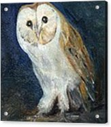 The Barn Owl Acrylic Print