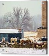 The Barn Yard Acrylic Print