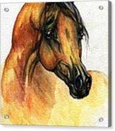 The Bay Arabian Horse 14 Acrylic Print