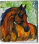 The Bay Arabian Horse 3 Acrylic Print