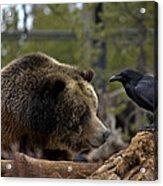 The Bear And Crow Acrylic Print