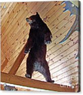 Come And Get Me Down From Here...signed The Bear Acrylic Print