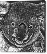 The Bear From Down Under Acrylic Print