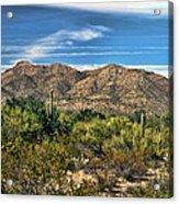 The Beautiful Arizona Desert Acrylic Print