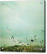 The Beautiful Flight Acrylic Print by Sharon Coty