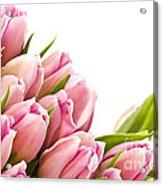 The Beautiful Purple Tulips Acrylic Print by Boon Mee