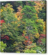 The Beauty Of Autumn Acrylic Print