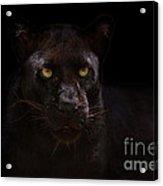 The Beauty Of Black Acrylic Print