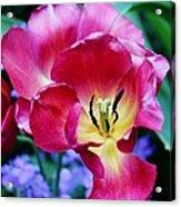 The Beauty Of Flowers Acrylic Print