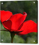 The Beauty Of Imperfection Acrylic Print