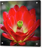 The Beauty Within Acrylic Print