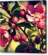 The Bee And The Blossom Acrylic Print