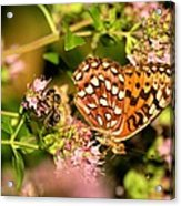 The Bee And The Butterfly Acrylic Print
