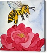 The Bee And The Rose Acrylic Print by Shirin Shahram Badie