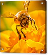 The Bee Gets Its Pollen Acrylic Print