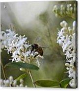 The Bee Acrylic Print