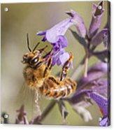 The Bee's Knees Acrylic Print